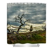 Burmis Tree And Wind Swept Pines Shower Curtain