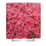 Burning Bush Shower Curtain