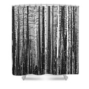 Burnt Forest Shower Curtain