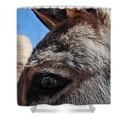 Burro Utah Shower Curtain