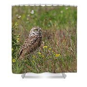 Burrowing Owl And Flowers Shower Curtain