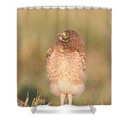 Burrowing Owl Fledgling II Shower Curtain
