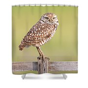 Burrowing Owl IIi Shower Curtain