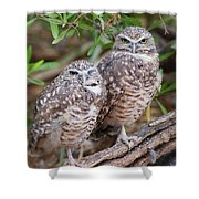 Burrowing Owl Pair  Shower Curtain