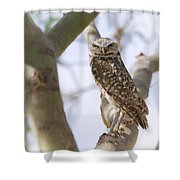 Burrowing Owl Perched On A Branch  Shower Curtain