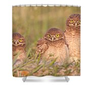 Burrowing Owl Siblings Shower Curtain by Clarence Holmes