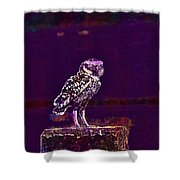 Burrowing Owl Small Owl Bird Nature  Shower Curtain
