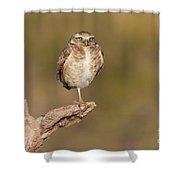 Burrowing Owl Taking A Break Shower Curtain