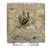 Burrowing Owl Tilted Head Shower Curtain