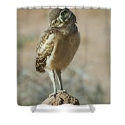 Burrowing Owlet-img_1414-2017 Shower Curtain