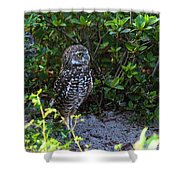 Burrowing Owls At Guard Shower Curtain