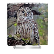 Buschman Park Owl Shower Curtain