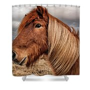 Bushy Icelandic Horse Shower Curtain by Pradeep Raja PRINTS