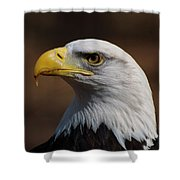 bust image of a Bald Eagle Shower Curtain