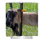 Busted Shower Curtain by Mike  Dawson