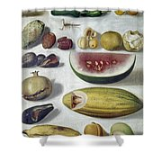 Bustos: Still Life, 1874 Shower Curtain