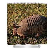 Busy Armadillo Shower Curtain