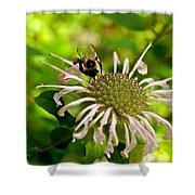 Busy As A Bee Shower Curtain by Valeria Donaldson