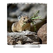 Busy As A Pika Shower Curtain
