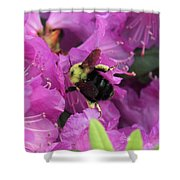 Busy Bee Collecting Pollen On Rhododendron  Shower Curtain