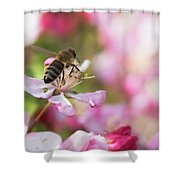 Busy Bee On A Crabapple Tree Shower Curtain