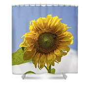 Busy Bee On A Sunflower Shower Curtain