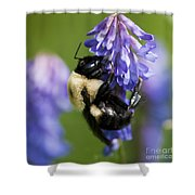 Busy Bumblebee.. Shower Curtain
