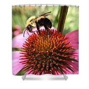 Busy Coneflower Shower Curtain