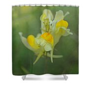 Butter And Eggs Shower Curtain