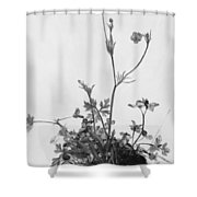 Butter Cups Red Clover And Plantain 1526 Shower Curtain