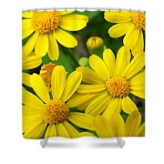 Butter Fields Shower Curtain