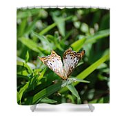 Butter Fly Shower Curtain