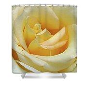 Butter Rose Shower Curtain