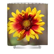 Butter Yellow And Crimson Red Coneflower Shower Curtain