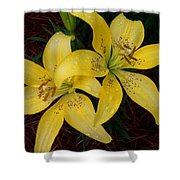 Buttercream Lilies Shower Curtain