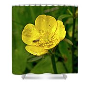Buttercup Hospitality Shower Curtain