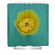 Buttercup, Ranunculus Shower Curtain