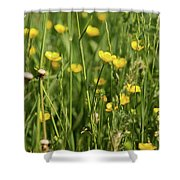 Buttercups And Green Grass At Moore State Park Shower Curtain