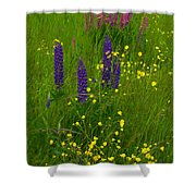 Buttercups And Lupines Shower Curtain