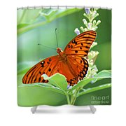 Butterflies Are Free Shower Curtain