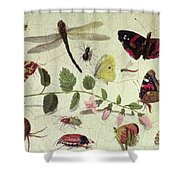 Butterflies, Insects And Flowers Shower Curtain