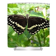 Butterflies Live - 8 Shower Curtain