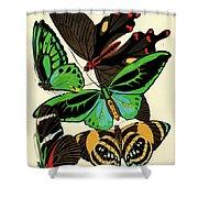 Butterflies, Plate-1 Shower Curtain
