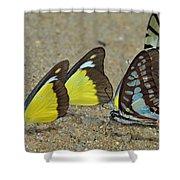 Butterflies Puddling Shower Curtain