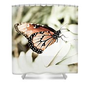 Butterfly 05 Shower Curtain