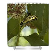 Butterfly 1 Shower Curtain