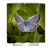 Butterfly 11 Shower Curtain