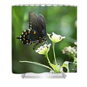 Butterfly 140 Shower Curtain