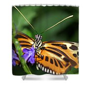 Butterfly 2 Eucides Isabella Shower Curtain