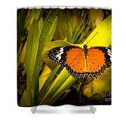 Butterfly 23 Shower Curtain